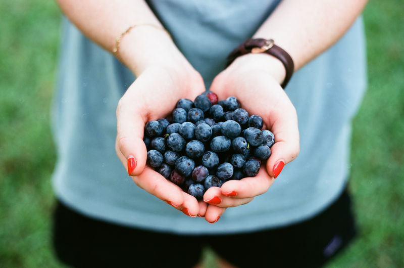 Berry Fruit Day Finger Focus On Foreground Food Food And Drink Freshness Fruit Hand Hands Cupped Healthy Eating High Angle View Holding Human Body Part Human Hand Midsection Nature One Person Outdoors Real People Wellbeing