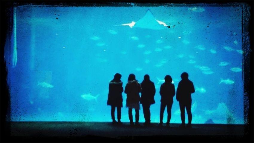 友情っていいよね Japan Friends Aquarium