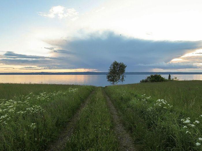 Landscape Path Tree Rönäs Horizon Evening Light Evening Sky Cycling
