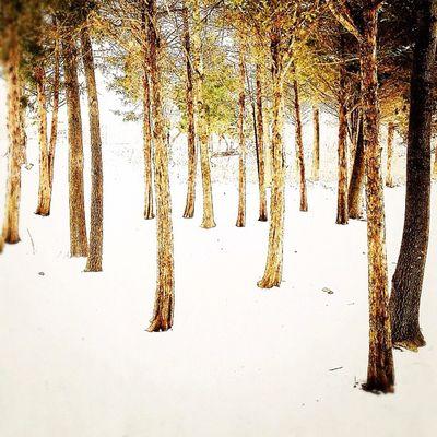 Trunk show. Ighype Instagramhub Nature Primeshots Trees Clubsocial Minimal Insta_underdog Snow Lessismore Natural Tt_wintrylandscape Simplicity B2b_overexposed Simple Contrast Snapseed Instamood Bestoftheday Ig Instagood Instaaaaah