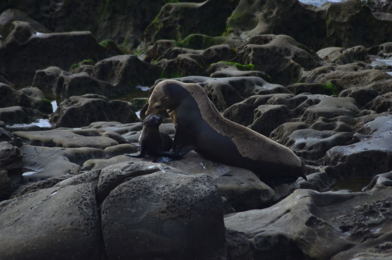 Doting mother seal with child