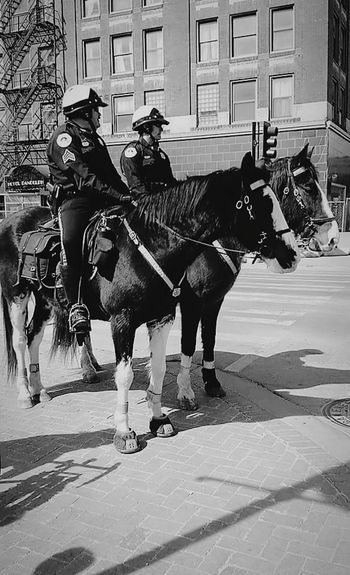 """"""" Even police can protect on cute ponies """" Police Horses Law Enforcement Protection Business Stories Horse Working Animal Domestic Animals Horsedrawn Animal Themes Horse Cart Riding Outdoors Adult City Day People Architecture Built Structure"""