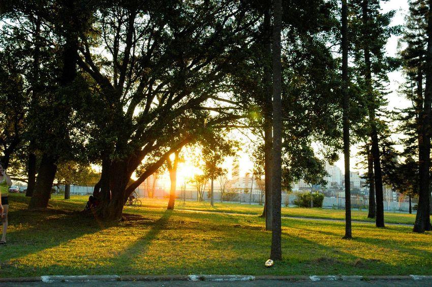 Museu Do Ipiranga Afternoon Tranquility Sunset