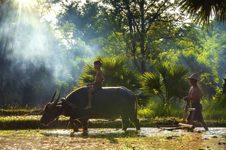 Boy with man sitting on buffalo at farm