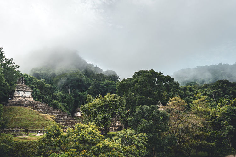 Tree Plant Fog Sky Scenics - Nature Beauty In Nature Nature Growth Green Color Environment No People Mountain Built Structure Day Lush Foliage Architecture Foliage Land Tranquil Scene Outdoors Ancient Civilization Rainforest Maya Mayan Ruins
