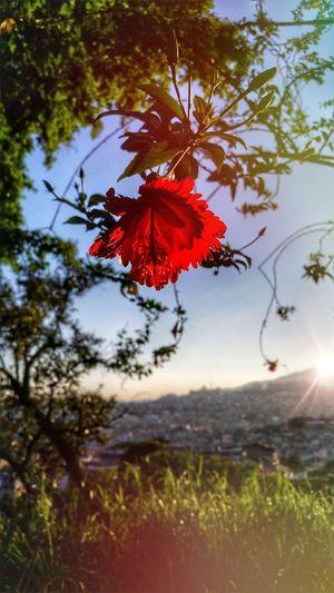 Red Nature Outdoors Tree Flower Beauty In Nature Day Sky Flor Vermelha CeuPerfeito De Manha Sextafeira Obrigado Deus Bom Dia