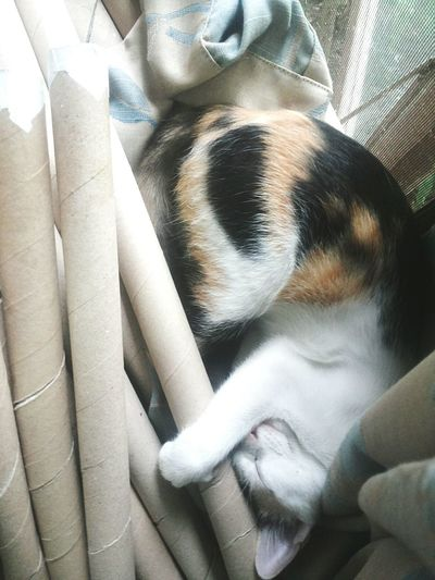 sleepy time 😄 Sleepy Cat♡ My Pets Eyeempets