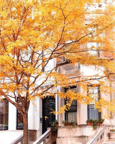 Tree by building in city during autumn