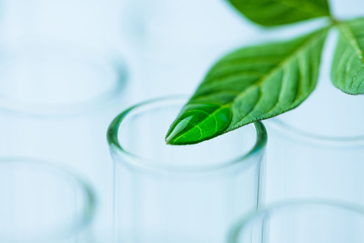 Close-up of leaf with water drop on test tube at laboratory