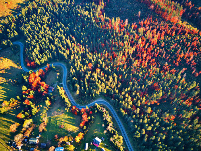 Plant Nature Aerial View High Angle View Beauty In Nature No People Tree Transportation Road Day Growth Outdoors Landscape Land Scenics - Nature Tranquility Environment Park Autumn Fall Mountain Hill Forest WoodLand Village
