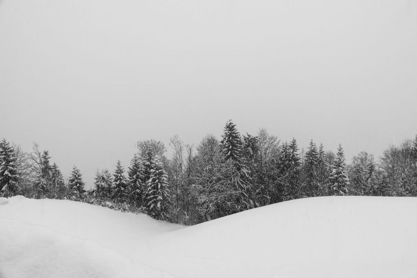 Black And White Black Forest Bw Dark Forest Grey Path Ski Touring Skitour Snow Snowfall Trees Winter Black And White Friday