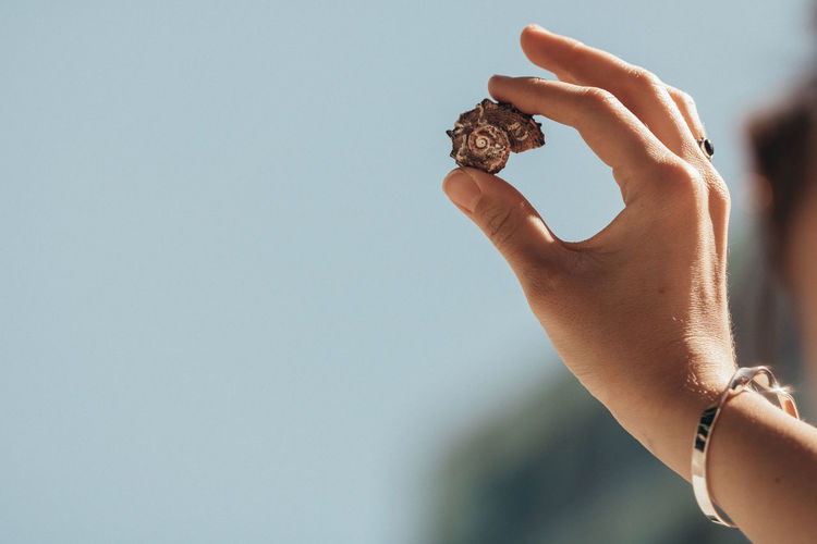 Cropped hand of woman holding ammonite during sunny day