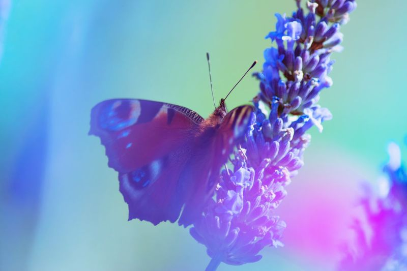 Neon Life Insect Butterfly - Insect One Animal Animal Themes Animals In The Wild Flower Fragility Nature Beauty In Nature Purple No People Butterfly Close-up Outdoors Freshness Day Plant Pollination Growth Flower Head
