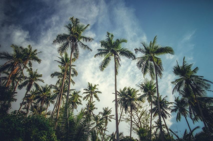 Palms Palm Tree Tree Sky Nature Growth Low Angle View No People Beauty In Nature Outdoors Day Philippines Sabangbeach Travel Travel Photography Been There.