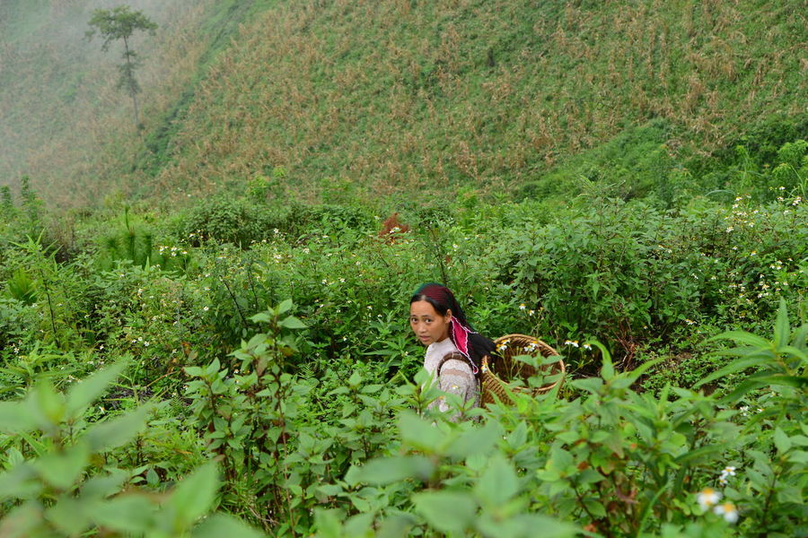 Unesco UNESCO World Heritage Site Đồng Văn Landscape Foggy Geopark Valley Village Plant Green Color Real People Growth Land Leisure Activity One Person Day Nature Field Women Lifestyles Beauty In Nature Females Girls Grass Selective Focus One Animal Outdoors