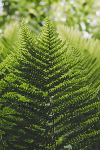 Stockholm botanical gardens. Fern Floral Floral Pattern Forrest Green Leaf Leaf Vein Leaves Moody Natural Nature Plant Plants Shadow Sunlight