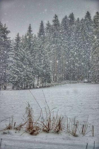 schneefall am