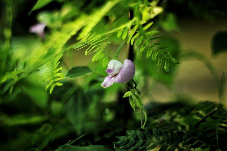 Lil flower need