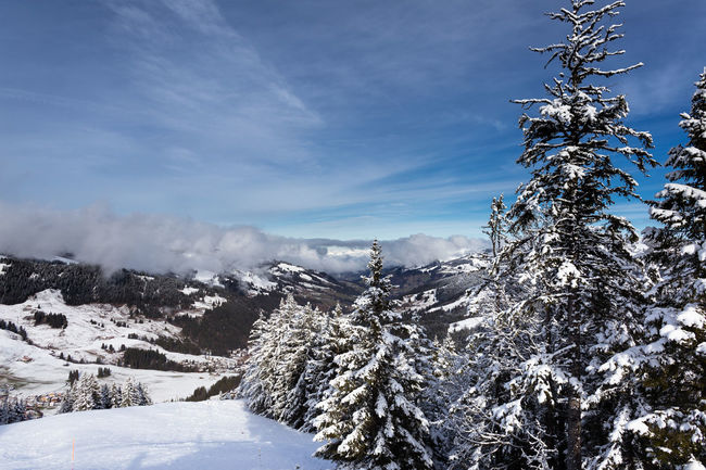 View from the mountain Alps Switzerland Blue Sky And Clouds Clouds & Sky Clouds And Sky Fir Firs Landscape Mountaintop Schwarzsee Snow Snow Covered Trees Tree White Winter Wintertime