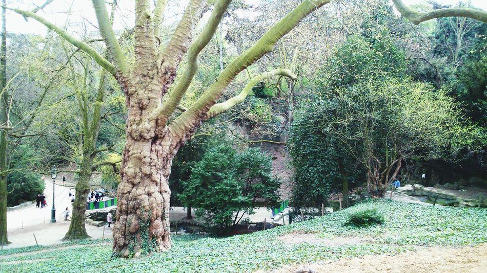 Arbre Remarquable tree Amazing Tree