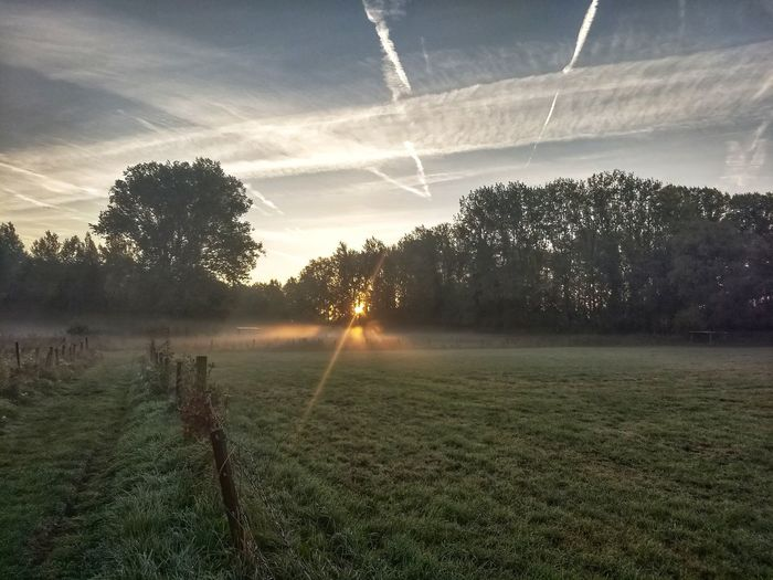 Morning Sunrise Sun Sunbeam Path Footpath Interesting Light Beauty In Nature Mist Misty Morning Tree Rural Scene Agriculture Field Sky Landscape Cultivated Land Agricultural Field Foggy Dawn