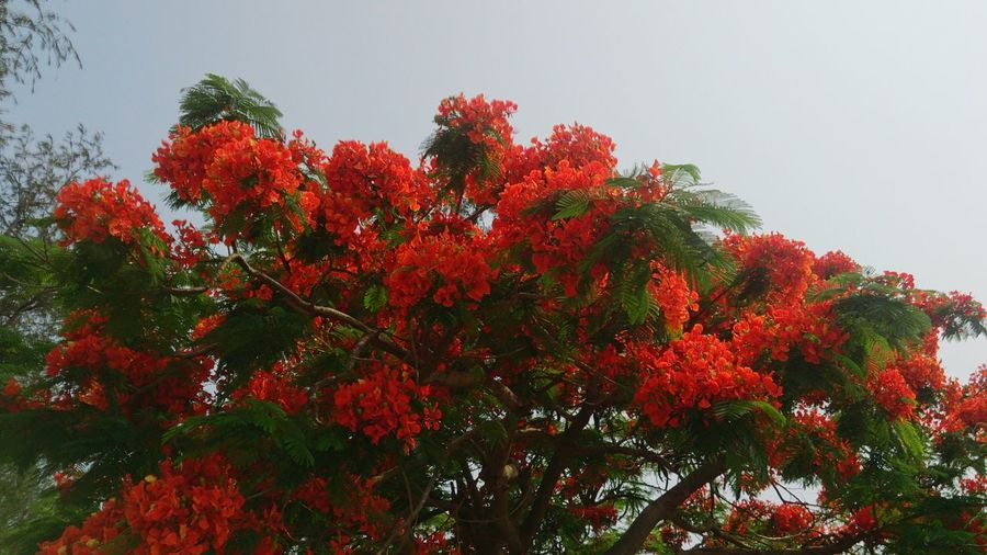 Tree Flower Mountain Red Tree Area Sky Plant Close-up Branch Leaves Tree Trunk Plant Bark Flower Tree