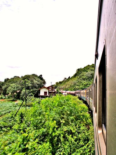 train, trains run, train in thailand Train Run Way Train Tree Agriculture Rural Scene Architecture Sky Plant Green Color Built Structure Greenery Creeper Plant Green Woods Countryside Vegetation Blossoming  Lush Lush - Description