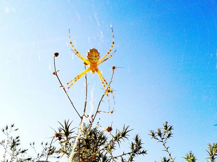 Spider Spiderworld Eyemnaturelover Natural Scary Scared Love Spiders Sun Dangerous Animals Eyem Nature Lovers