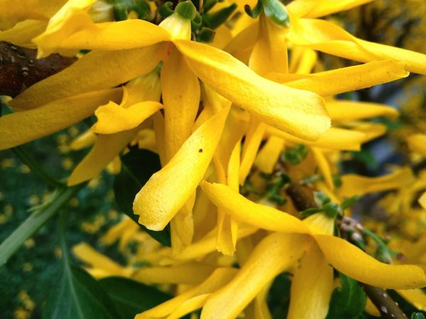Yellow Plant Flower Flowering Plant Growth Freshness Close-up