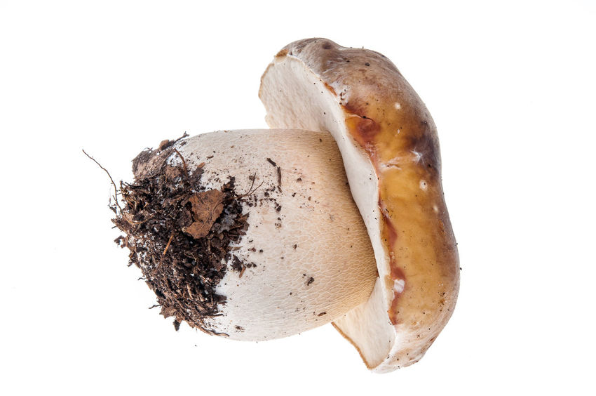 Studio Shot White Background Healthy Eating Food No People Close-up Mushroom Steinpilz Ceps Food And Drink Raw Food