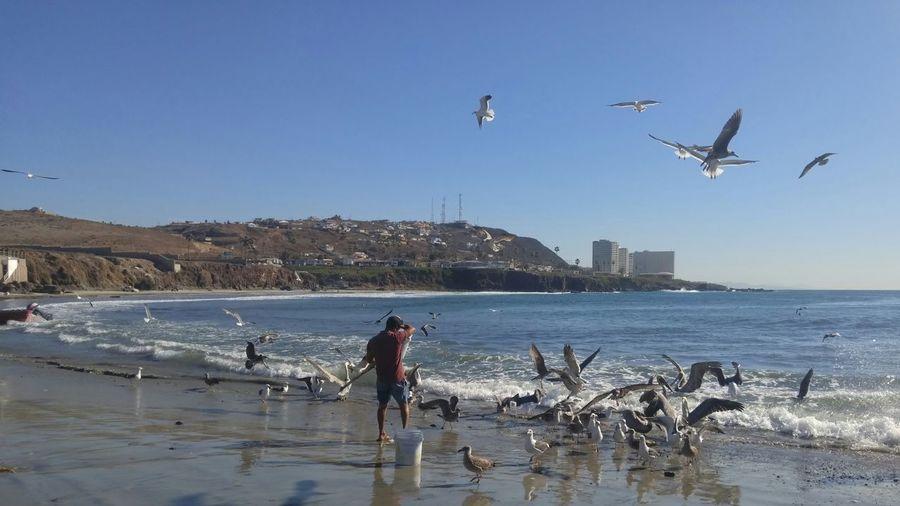Man feeding birds on shore at beach against clear sky