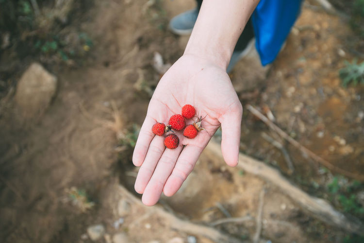Human Hand Human Body Part Food Holding Red Healthy Eating Hand Food And Drink Berry Fruit Day High Angle View One Person Freshness Fruit Nature Real People Wellbeing Lifestyles Close-up Outdoors Finger Ripe