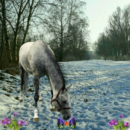 Einfach mal so den Frühling hergestellt. 😊 Einfach So :) Picsart Winter Snow Day Beliebte Fotos