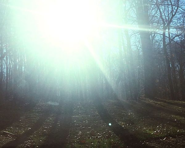 Took this on the way out from virginia Virginia WashingtonDC Woods Sunny Nature Beautiful