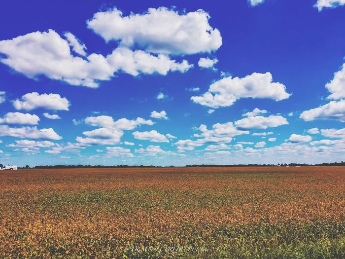 Agriculture Field Sky Cloud - Sky Landscape Rural Scene Nature Farm Growth Beauty In Nature Tranquility Scenics Crop  No People Outdoors