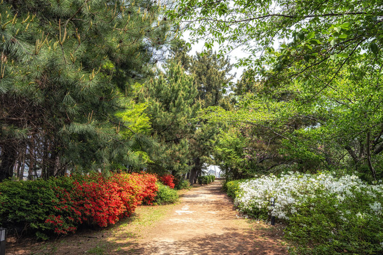 Footpath amidst flowering trees in forest