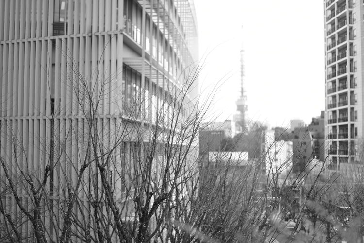 distance 2016.12.29 58mm f/1.4 Black & White Black And White Black And White Photography Black&white Blackandwhite Blackandwhite Photography Blackandwhitephotography Bokeh Bokeh Photography Japan Monochrome Monochrome Photography Roppongi Tokyo