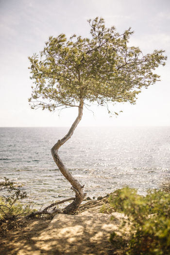 Tree in a sea