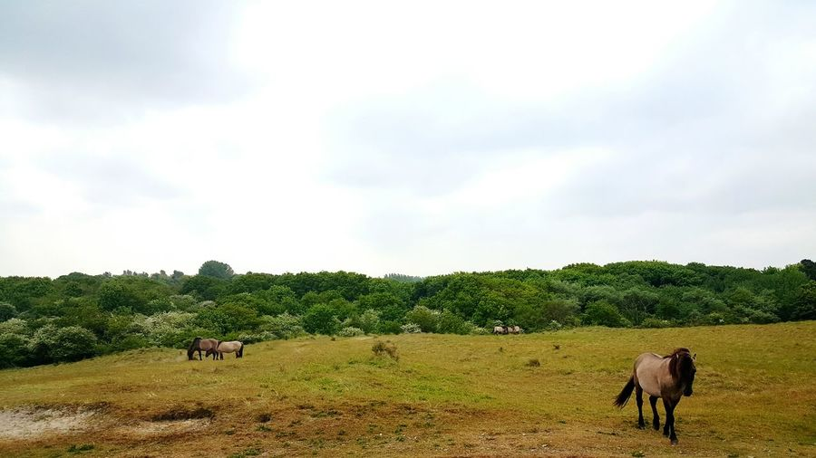 Wildlife Taking Photos Forrest Netherlands Oranjezon Trees Horses Wildlife & Nature Nature Zeeland