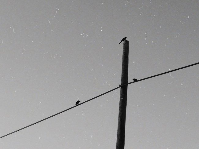 Film Photography Blackandwhite Film Film Cable Power Line  Electricity  Star - Space Outdoors Low Angle View Sky No People Nature Electricity Pylon Bird Animal Themes Telephone Line