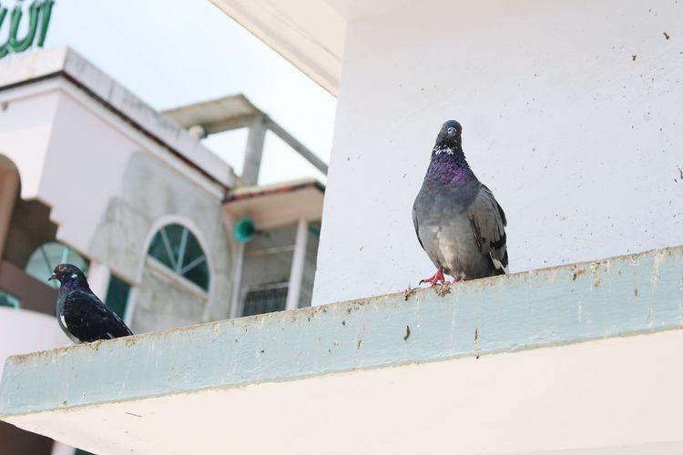 Sylhet Hazratshahzalal Mazar Pigeons Everywhere Getting Inspired Eye4photography  Fresh 3 Travel Photography Tryingout Showcase April