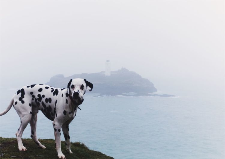 Dogs On Landscape Against Cloudy Sky