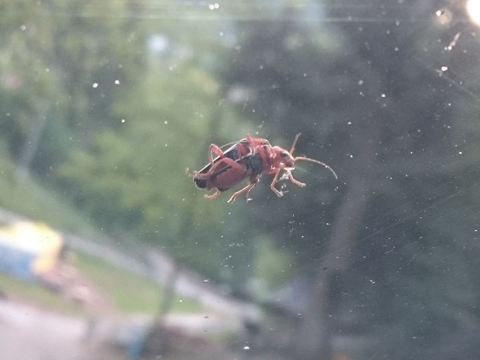 Bugs having some reproduction fun on my car window Through Glass Through The Window Nature Reproduction Bug Love Full Length Close-up Animal Themes Insect Bug