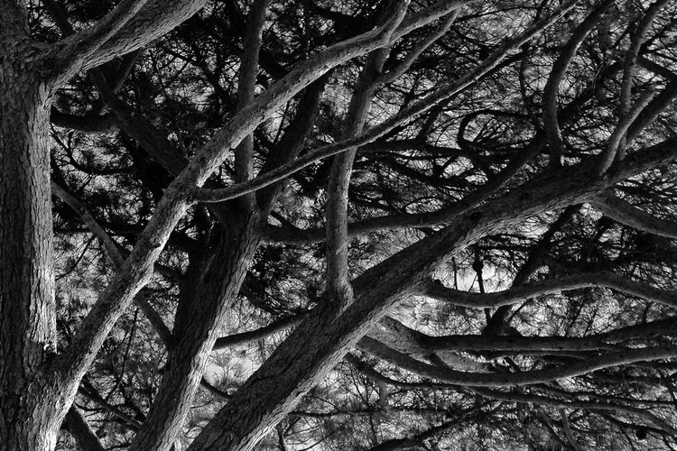 Weave Beauty In Nature Braid Branch Day Forest Growth Low Angle View Nature No People Outdoors Tangles Tranquility Tree Tree Trunk The Week On EyeEm EyeEm Gallery EyeEmBestPics EyeEm Selects Perspectives On Nature Black & White Friday Black & White Photography Be. Ready. Visual Creativity