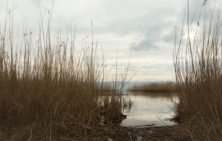 Lakeside Beauty In Nature Boat Cakirca Cloudy Fishing Boat Grassy Iznik Lake View Lakeside Marshland  Nature Outdoors Reed - Grass Family Reeds Reeds At The Lake Reeds By Water Reeds, Weeds, Marshland, Marsh, Shoreline Shorelines Sky And Clouds Stormy Weather Straw Tranquility Turkey Water