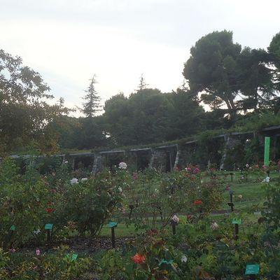Rosaledadecervantes Parquecervantes Parque  Park Puisto Ruusupuisto Barcelona Bcnexploradores Bcnexplorers Thebarcelonist Nature