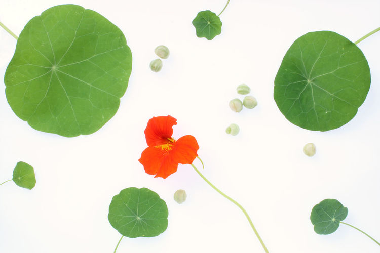 High angle view of flowering plant against white background