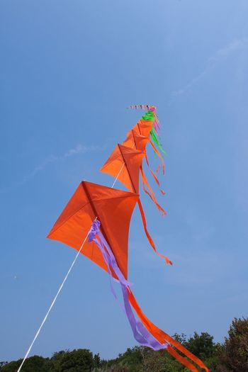Chain of kites Multi Colored Blue No People Day Outdoors Sky Tree Nature Kite Kites On The Beach Kite Flying Kite Chain