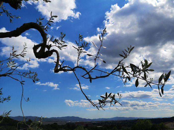 Nature Day Tree