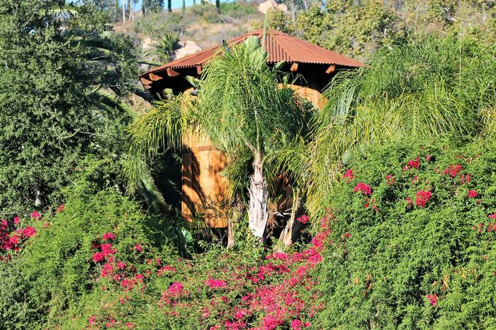 Beauty Beauty In Nature Pink Flowers In Bloom Beautiful Hut Surrounded By Flowers And Palm Trees Pink Flowers Growing Around Surrounded By Natures Beauty Beautiful Sunny Day  Green Growth Outdoors No People Close-up Palm Trees ❤❤